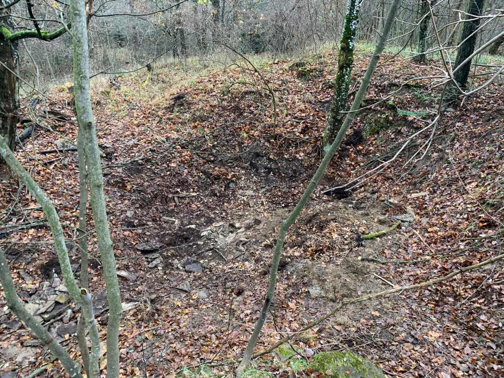 Wald-Muellentsorgung-aufgeraeumt